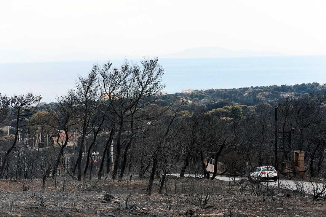 Området där elden dragit fram.