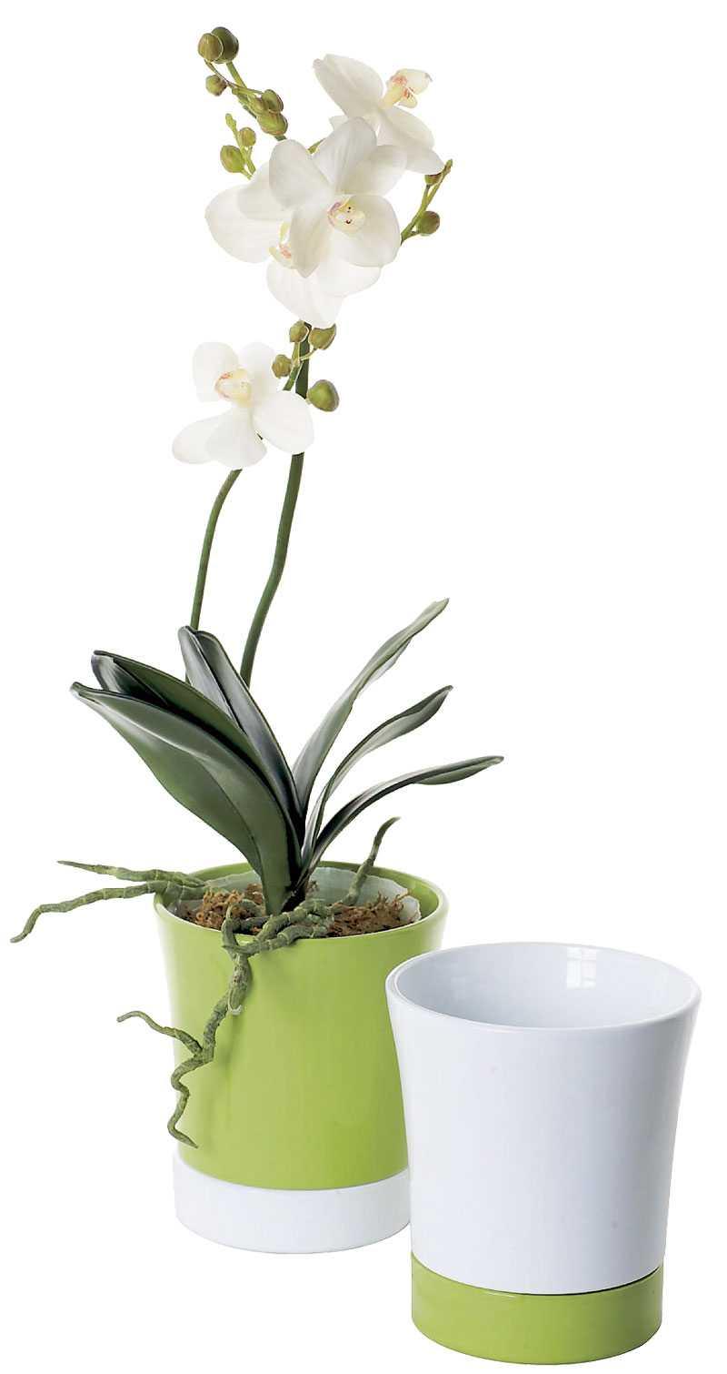 Plantera om vintertrötta växter i vårfina krukor från Blomsterlandet, 49:90 kr.