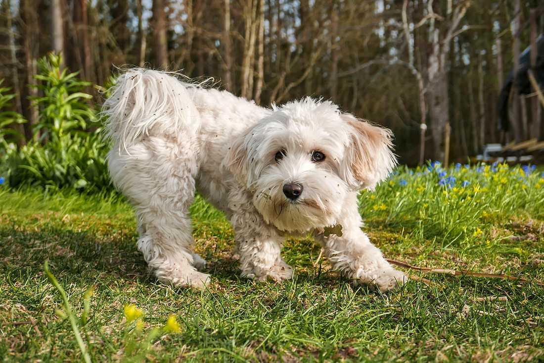 Hundfrimärkena kommer ut i augusti. Arkivbild på hund som inte är med i tävlingen.
