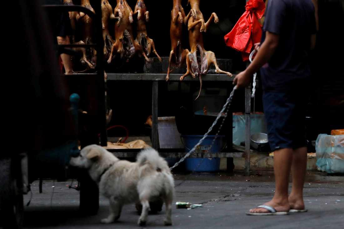 VARNING! Starka bilder från Yulins hundfestival.