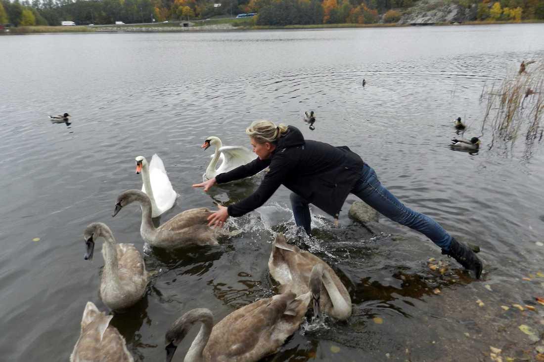 Lili Päivärinta räddar svanar.