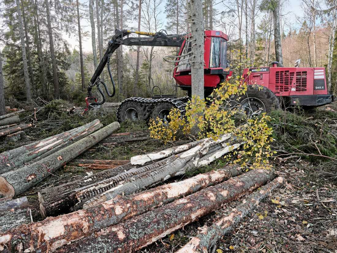 Skogsutredningen ska hitta en balans mellan naturvård och avverkning. Arkivbild.