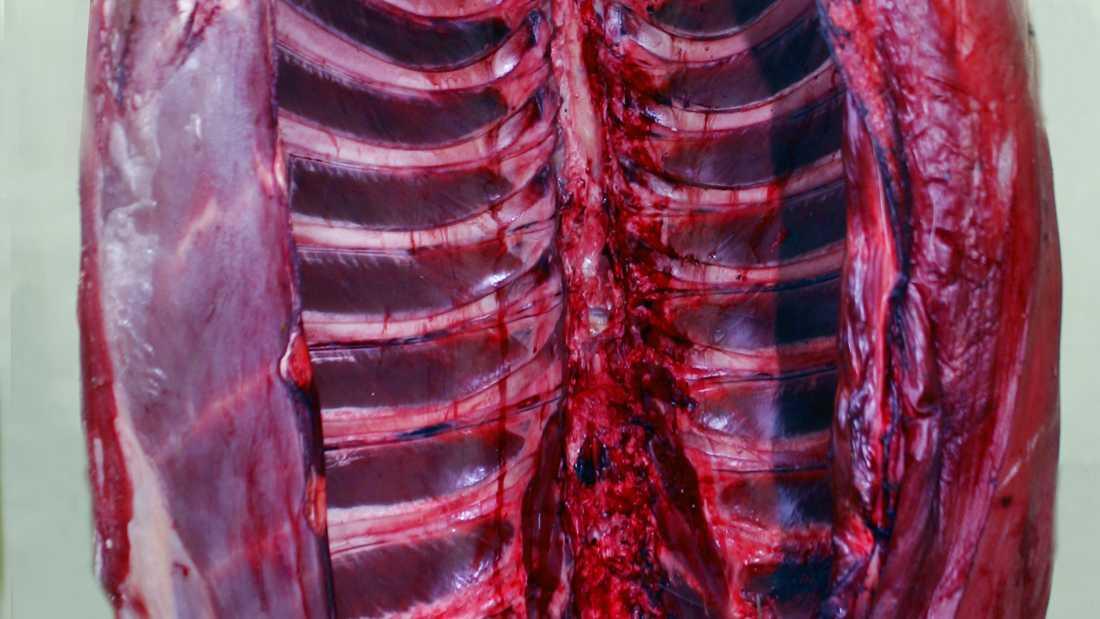 På bilden syns ett älgkadaver. Arkivbild.