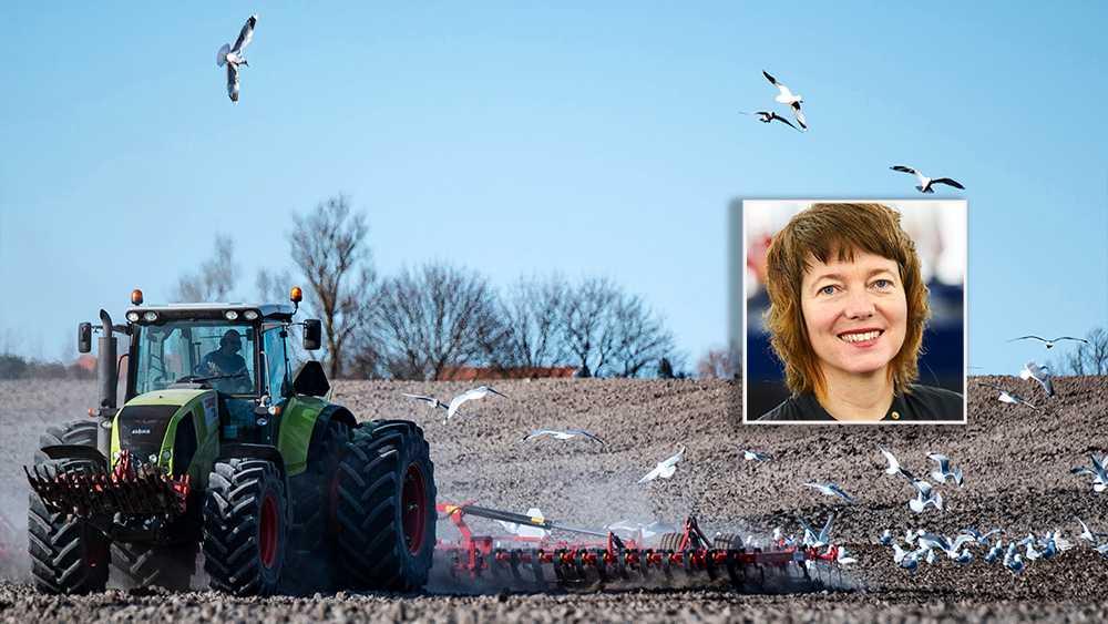 EU lägger fram ambitiösa klimatstrategier samtidigt som den egna jordbrukspolitiken skapar stora utsläpp och skadar den biologiska mångfalden. Som om detta inte vore nog är stödet överlag orättvist fördelat enligt ett slags omvänt Robin Hood-system, skriver Malin Björk (V).