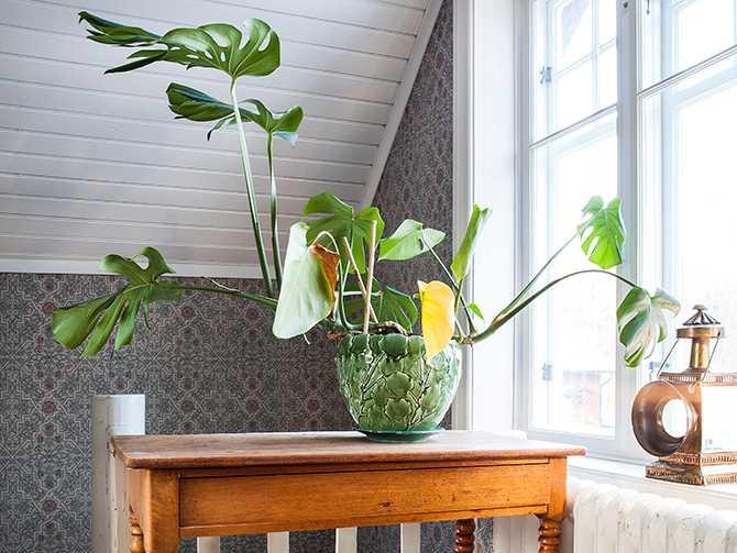 Kruka i jugendstil på ett tidstypiskt bord med svarvade ben. Övervåningen värms upp av de gamla radiatorerna,.