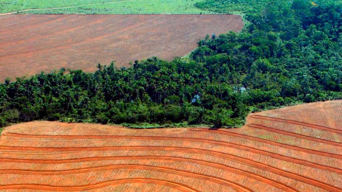 Regnskog har avskogats för att ge plats åt odling av sojabönor, i den här bilden tagen i Novo Progreso i Brasilien 2004.