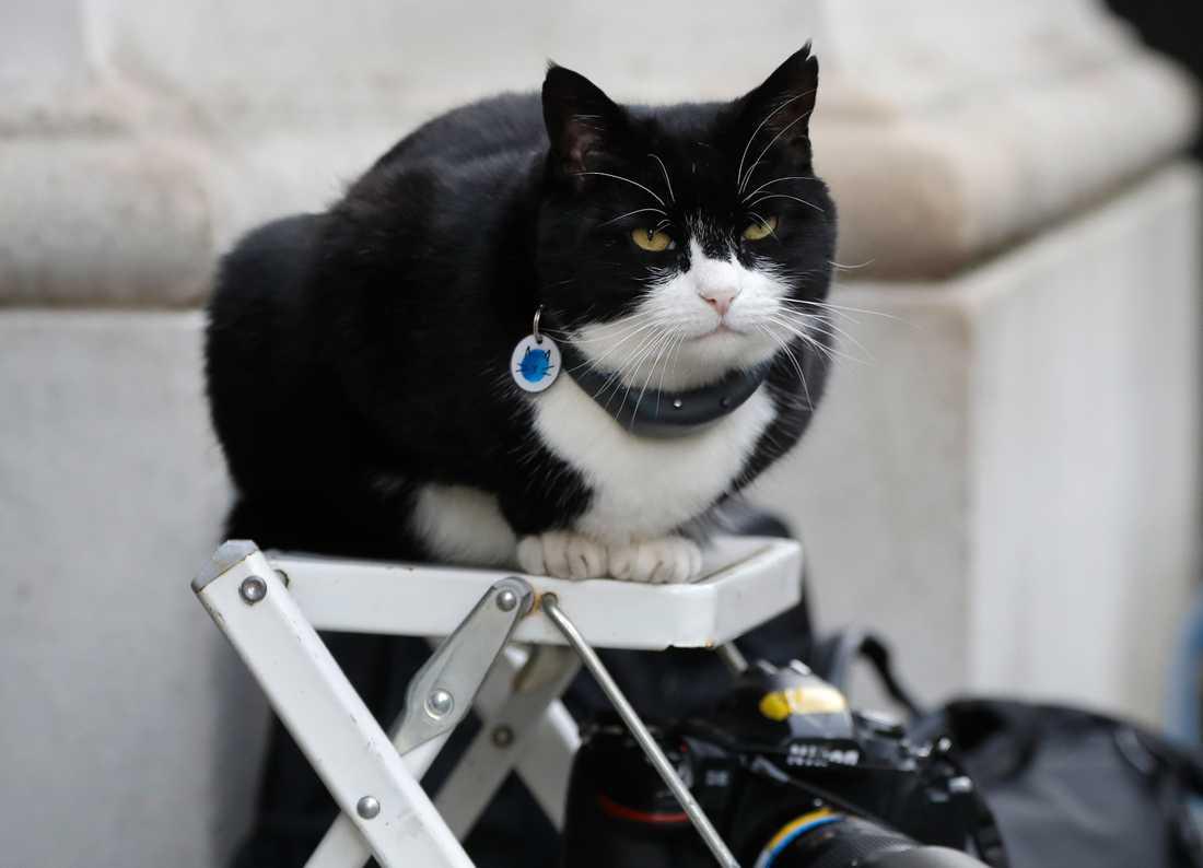 Palmerston, katten som tidigare bott på utrikesdepartementet i Storbritannien, har gått i pension. Arkivbild.