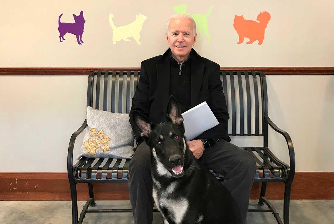 Joe Biden med schäfern Major som den blivande presidenten adopterade från ett hem för herrelösa hundar.