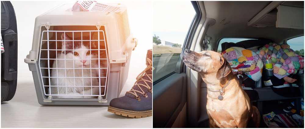 Mycket att tänka på när du reser med djur.