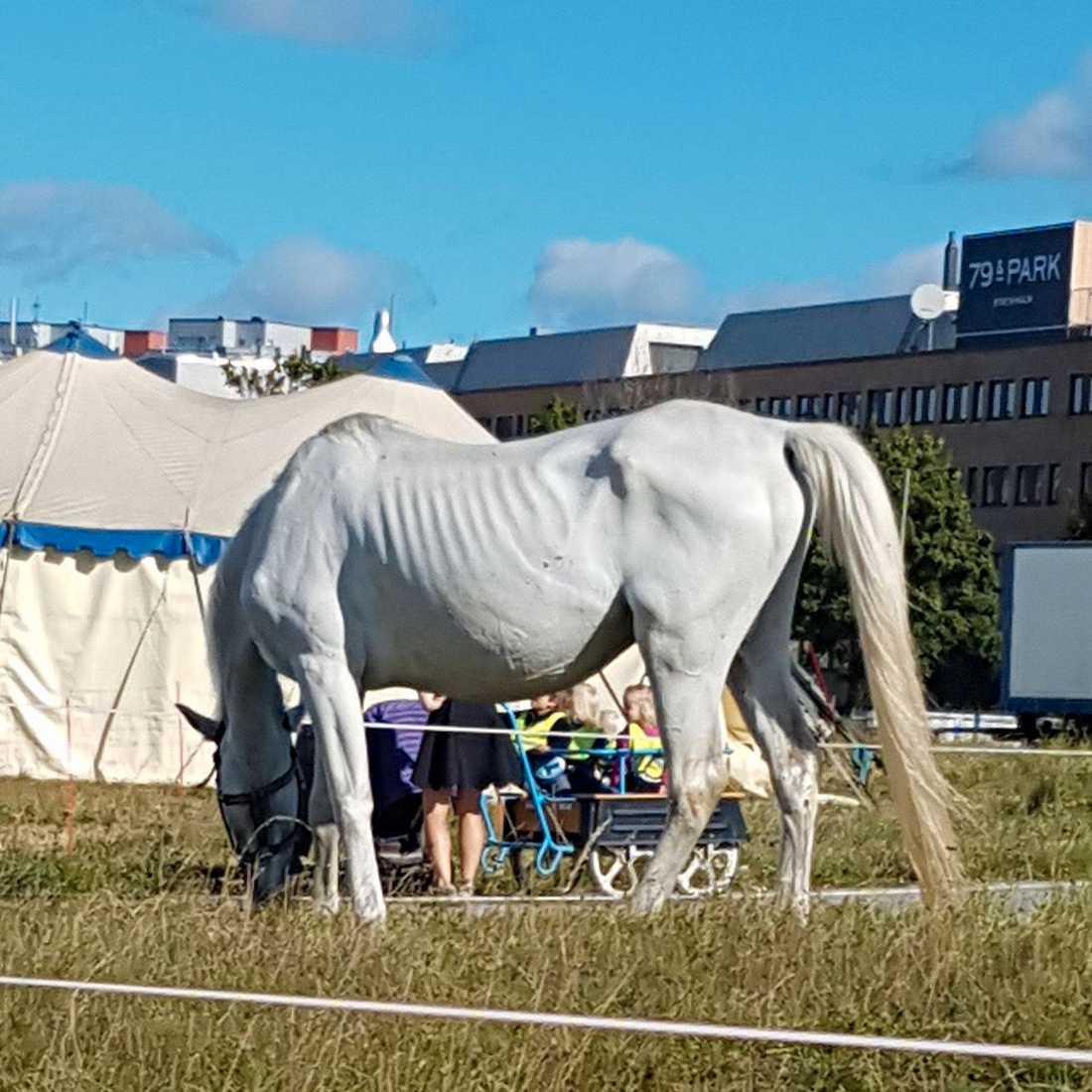 Här är bilden Emma tog av Cirkus Scotts häst.