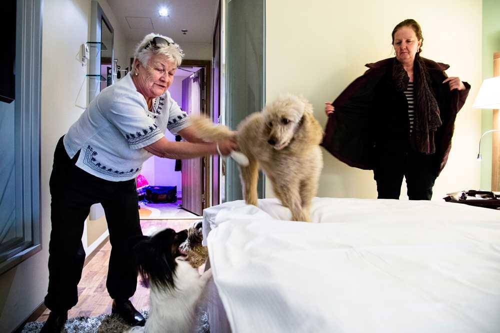 Merit Svalin och Eva From checkar in på sitt rum. Deras hundar heter Ammi (den största), Ludde och Vanilla (den minsta).
