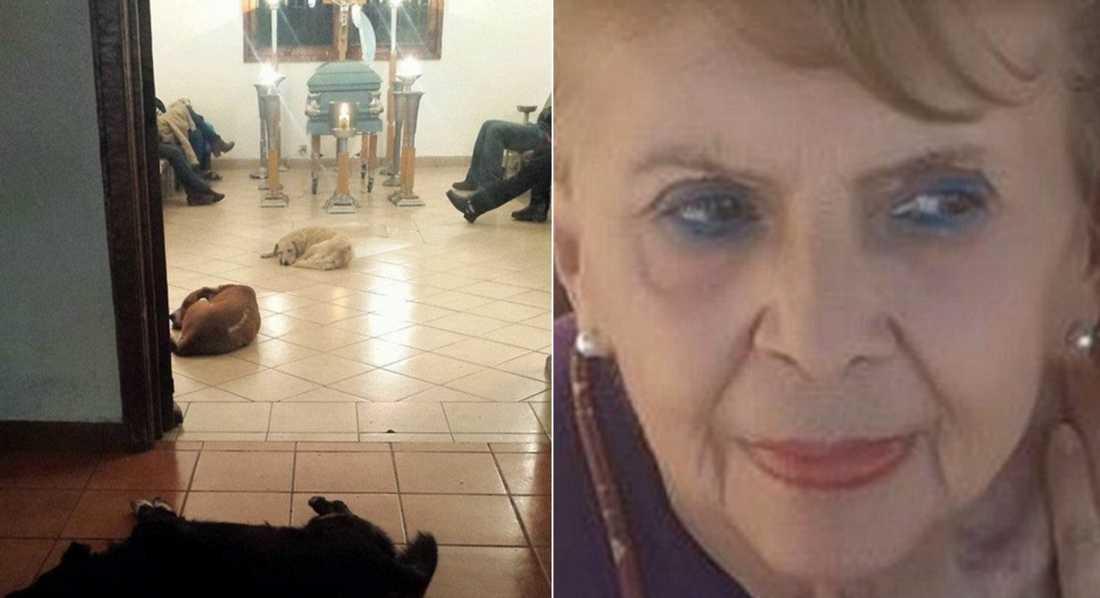 Margarita Suarez och hundarna som dök upp på hennes begravning. Foto: Facebook