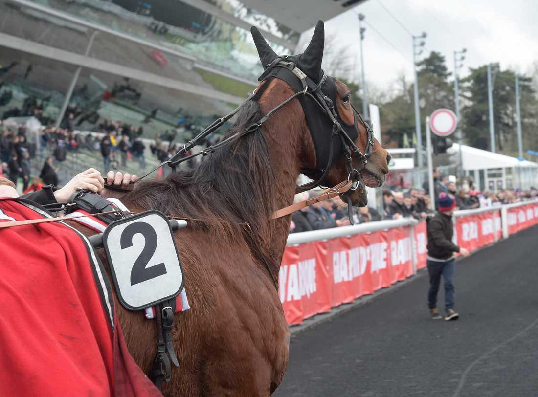 Cleangame är drömhästen för Solvallas sportchef Anders Malmrot
