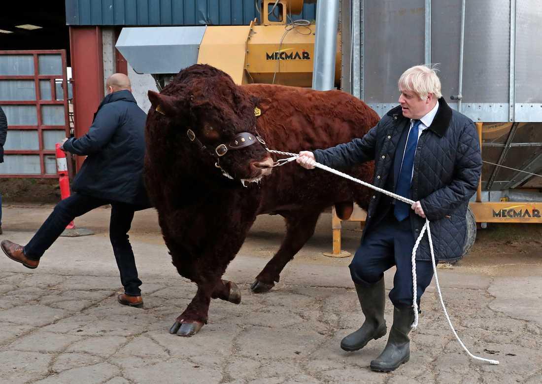 Premiärminister Boris Johnson tampas med en tjur på besök i Skottland på fredagen.