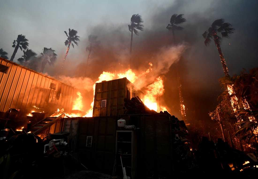 Minst nio personer har hittills dött i bränderna.