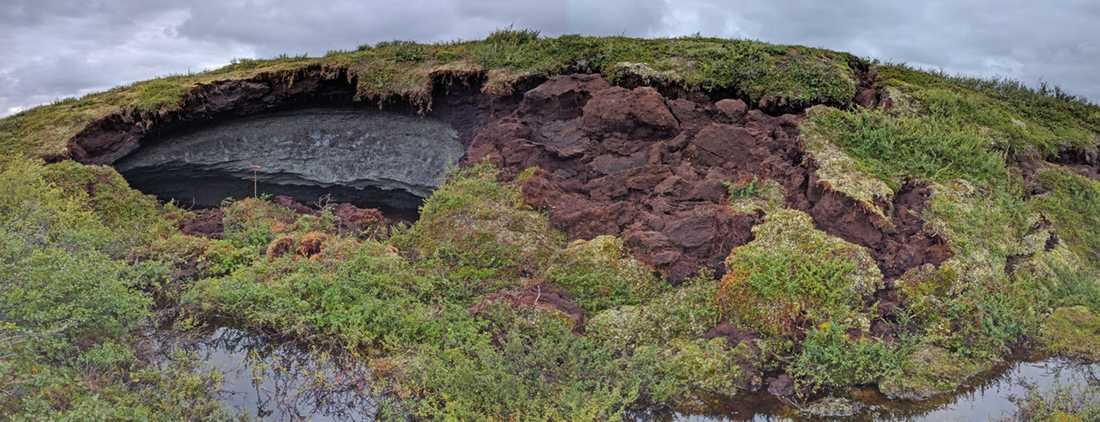 Palsens bruna lager av torv och mineraljord har delvis rasat och blottat den grå kärnan av permafrost.