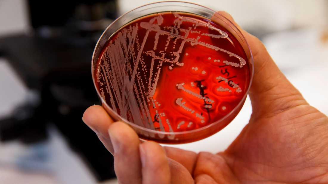 Resistenta bakterier orsakar redan i dag 700000 människors död varje år, enligt FN.