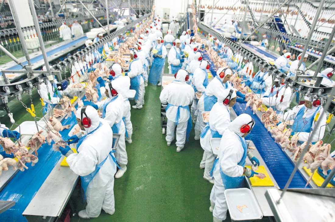 BILLIG – MEN FARLIG På den här fabriken i Nova Mutum i norra Brasilien slaktas och styckas kyckling som sedan säljs i Sverige.