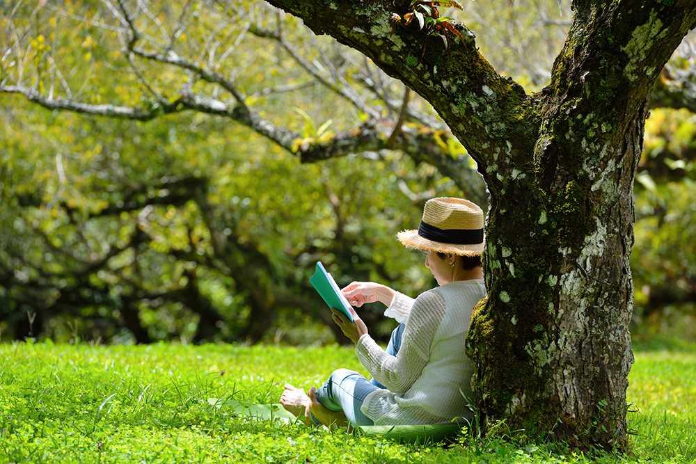 Dröm dig bort till trädgårdsböckernas land.