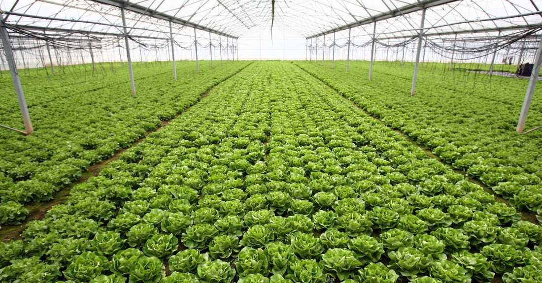 Grönt är skönt? Grönsaker och frukt från Sydeuropa kan vara besprutade med olagliga bekämpningsmedel.