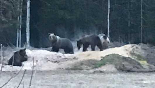Björnsamling i trädgården.