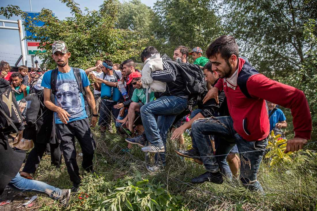 Närmare 400 flyktingar har det senaste dygnet gripits vid gränsen av ungersk polis.