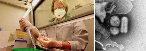 De rapporterade fallen av svininfluensa ökar i Sverige.
