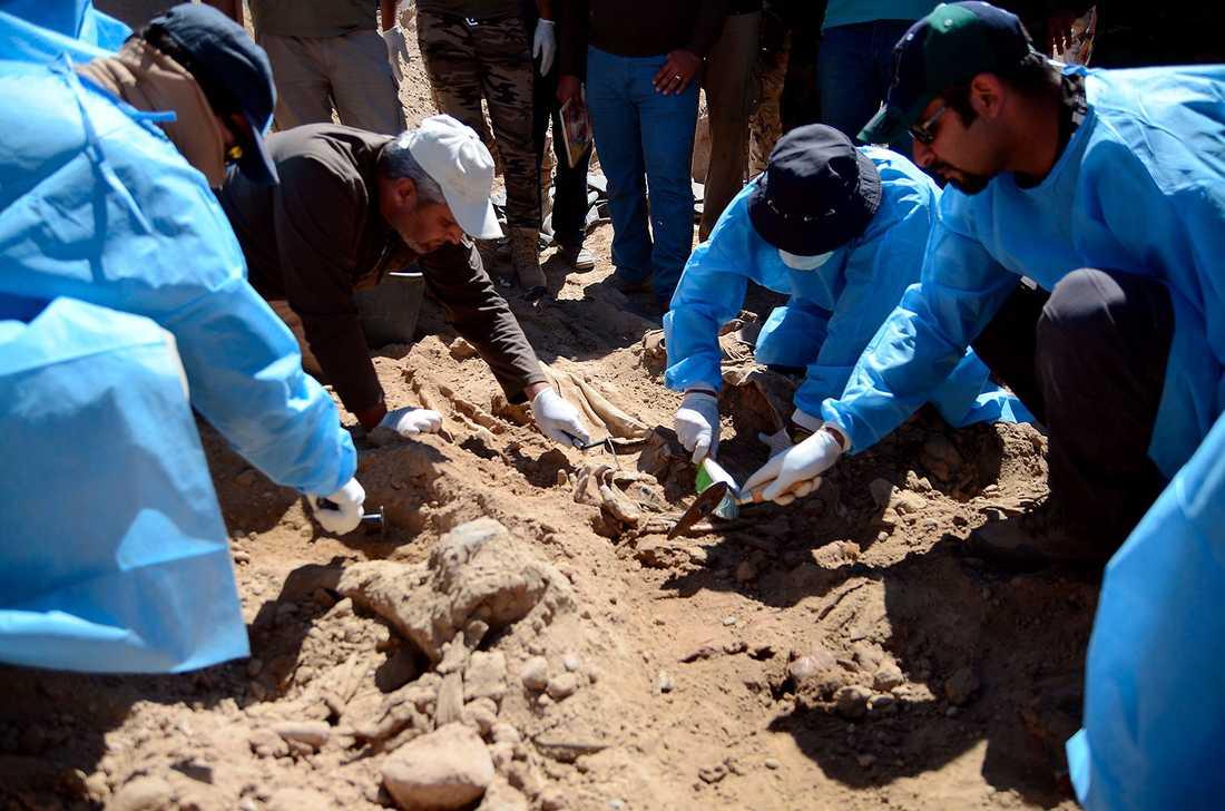 """Irakiska tekniker letar efter offer för IS massaker på irakiska soldater vid lägret """"Camp Speicher"""" utanför Tikrit."""
