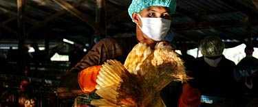 Vietnamesiska forskare varnar för att det fruktade fågelviruset har förändrats och nu lättare kan angripa människor.