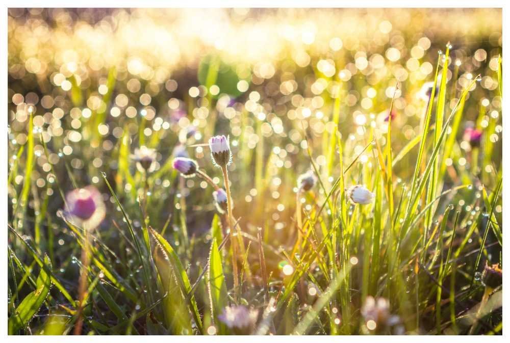Fästingar trivs i gräs.