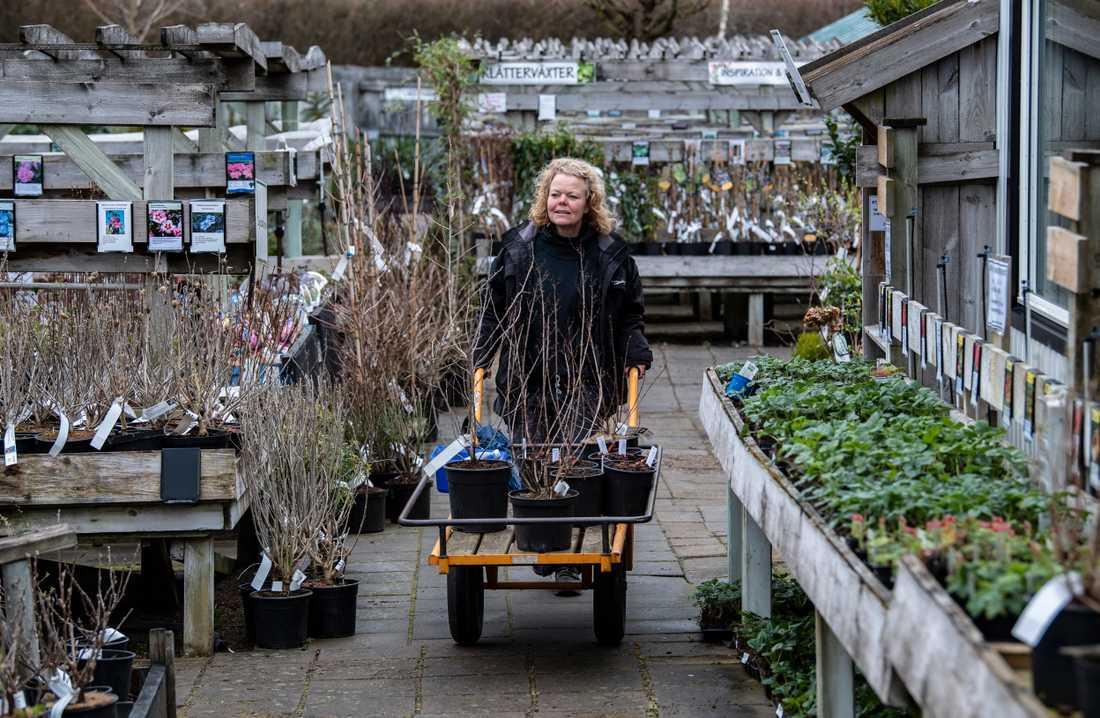 Karin Wahlberg kör ut nya växter i handelsträdgården Flyinge Plantshop utanför Lund.