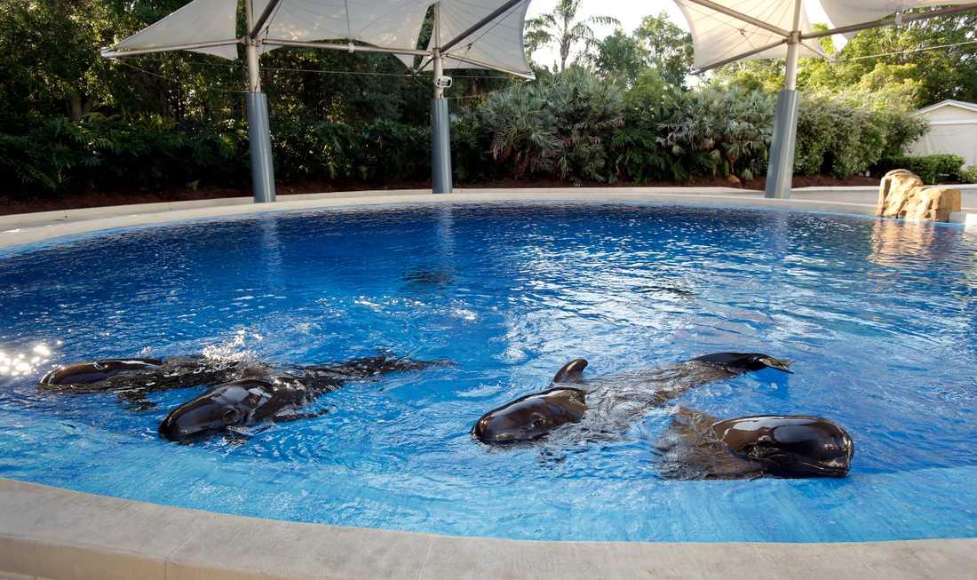 Sea World i Florida.