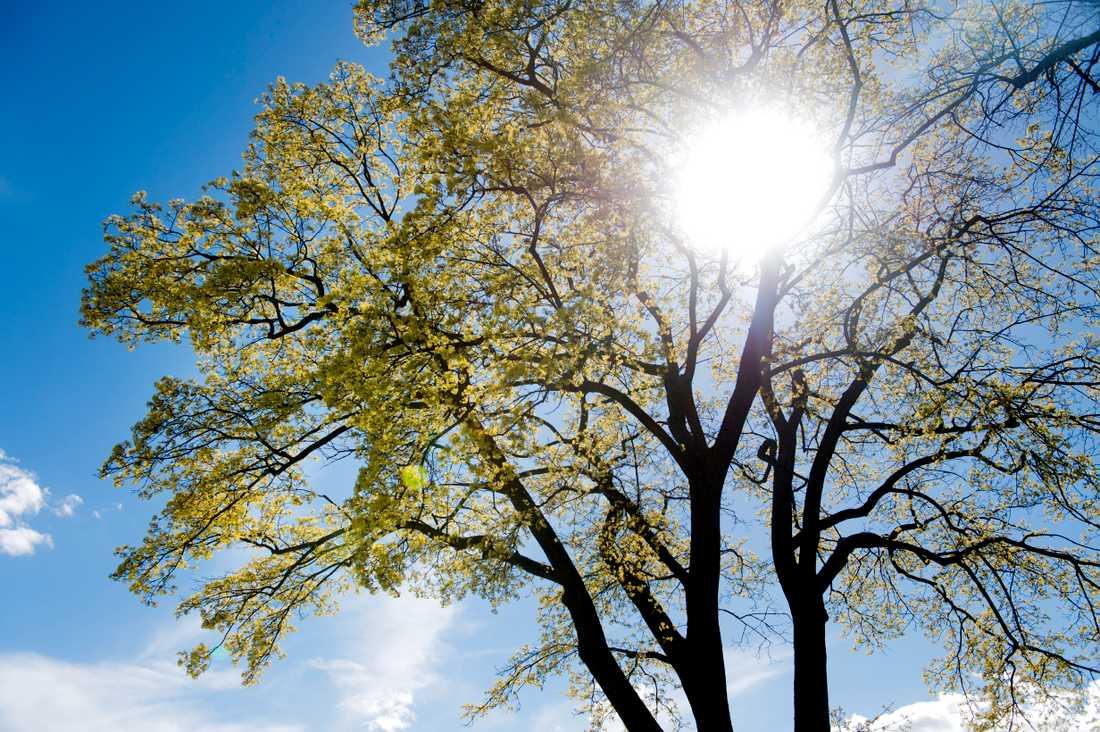 Våren kan infalla redan den här veckan.
