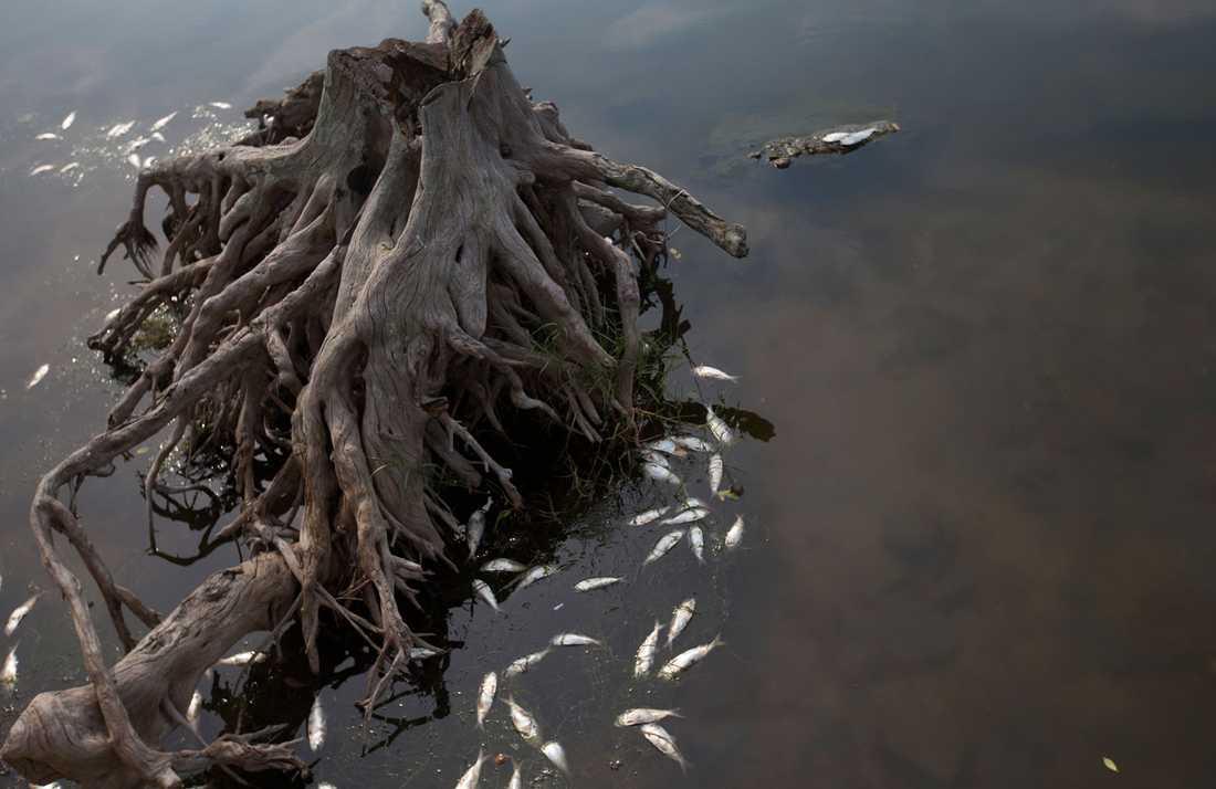 Vattnet i Rio har länge kritiserats. Så här såg det ut förra året.