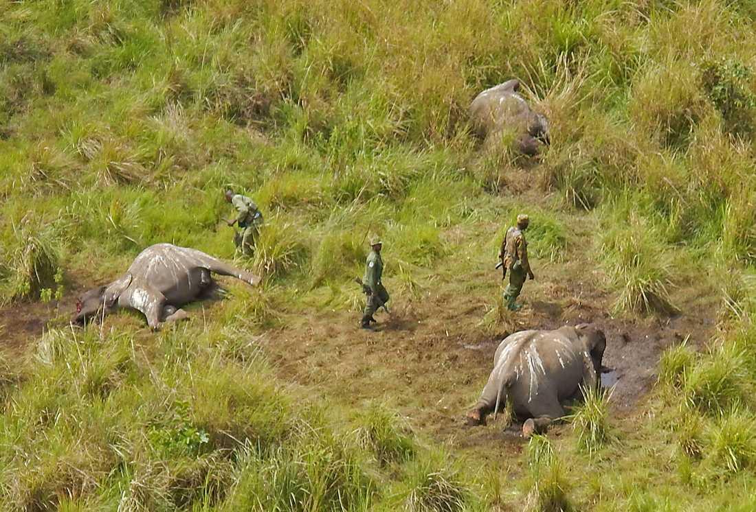 Garamba nationalpark har tidigare drabbats av tjuvjakt.
