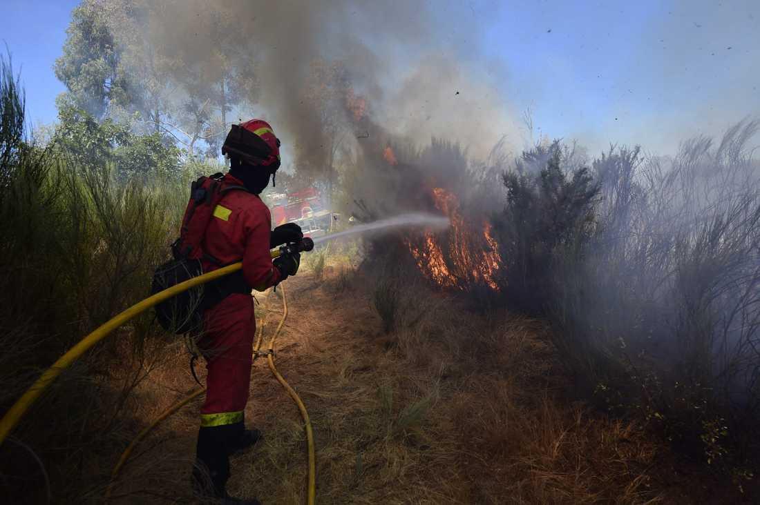 Räddningspersonal bekämpar skogsbrand i nordvästra Spanien.