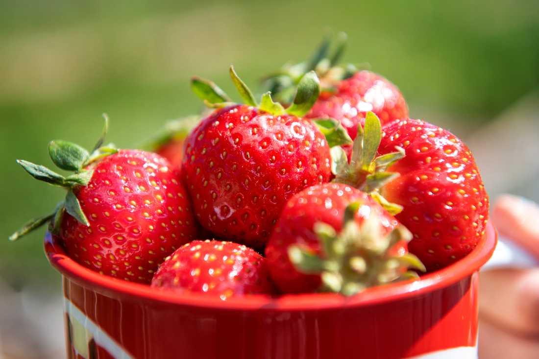 Värmen i södra Sverige har räddat de svenska jordgubbarna, lagom till midsommar. Arkivbild.