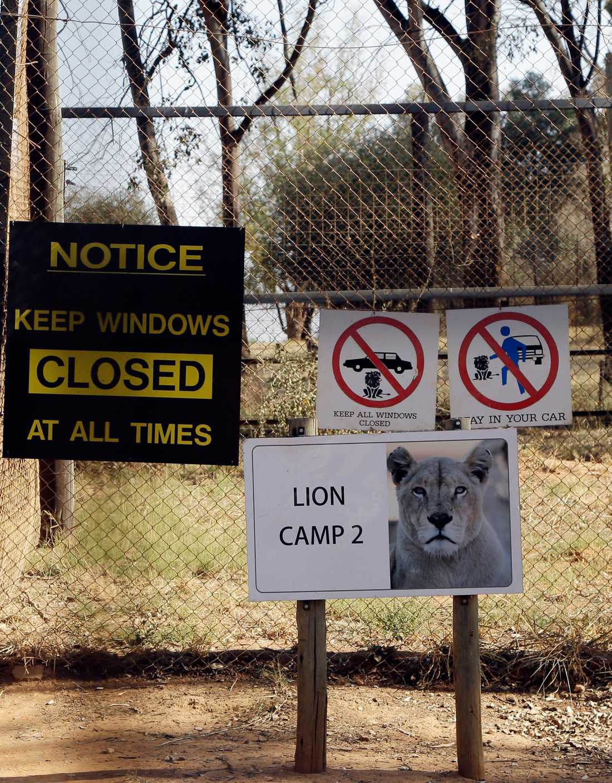 Lejonparken Lion Park utanför Johannesburg.