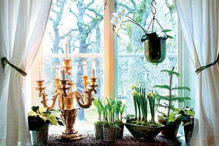 FINT I FÖNSTRET Möt advent med doftande blommor. Från vänster på fönsterbrädet: vit julstjärna, krukodlade iskonvaljer, tazetter och Norfolkgran. krukorna står på en rotrismatta och i fönstret hänger en brudorkidé.