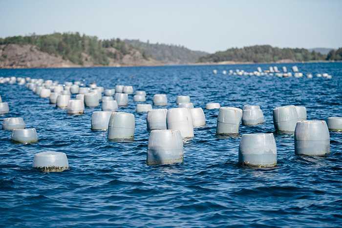 """FRAMTIDENS MAT """"Här i fjorden växer 3000 ton musslor, och då ska du ha i bakhuvudet att ett kilo musslor filtrerar och renar 6000 liter vatten per dygn, säger Janne Bark."""