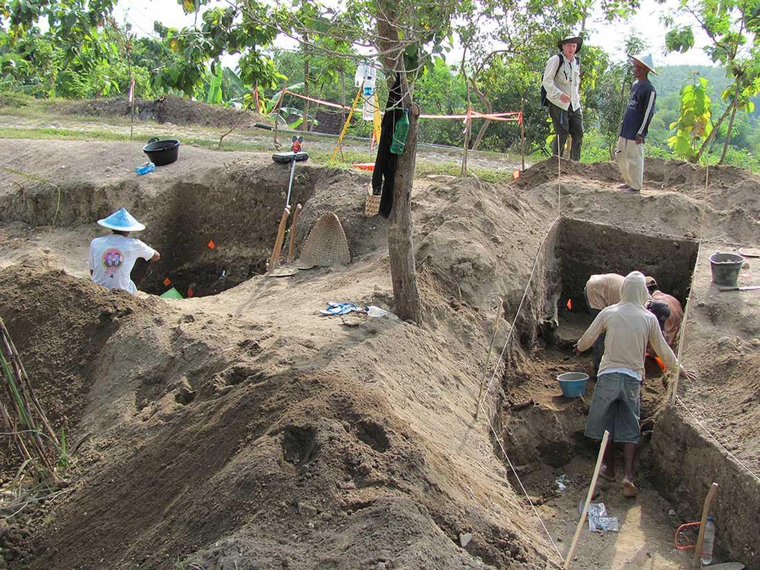 På 1930-talet hittade nederländska forskare resterna av tolv kranier från Homo erectus. Efter ett massivt detektivarbete återupptäcktes platsen år 2009. Nu har forskarna daterat jordlagren och drar slutsatsen att Homo erectus levde på Java för mellan 108000 och 117000 år sedan, vilket är betydligt senare än vad man tidigare trott.