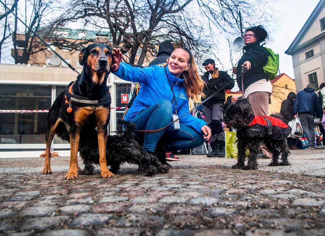 2010 började Sandie hjälpa utsatta hundar och 2012 bildade hon Scalas Hundhjälp.