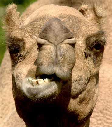 Giraffer, åsnor och kameler är hemlösa efter konkursen.