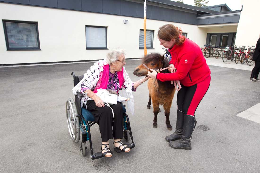 Allys ser ut att trivas med all uppmärksamhet och framför allt bli kliad under hakan av Lizzie Eriksson, 94.