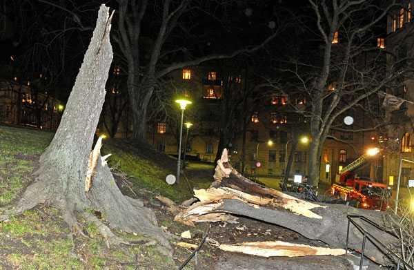 Sönderblåst träd i centrala Stockholm.