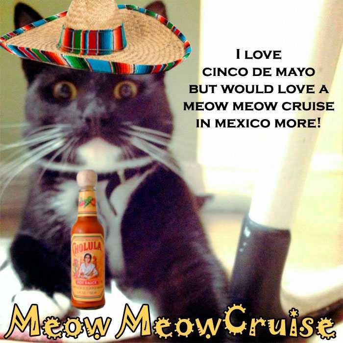 Åk på kattkryssning –utan katter. Annons från Meow Meow Cruise. Cinco de Mayo är en helgdag som firas i Mexiko med anledning av mexikanska arméns seger över fransmännen den 5 maj 1862.