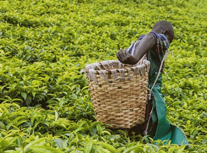 Utvecklingsfonden AECF:s mål är att förbättra livet för fattiga människor i Afrika söder om Sahara.