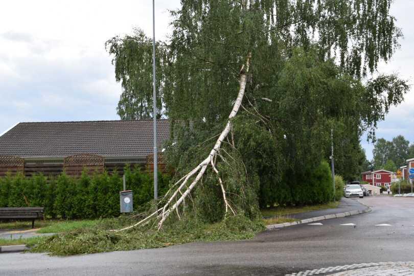 Även träd gav vika i ovädret i Hindås.