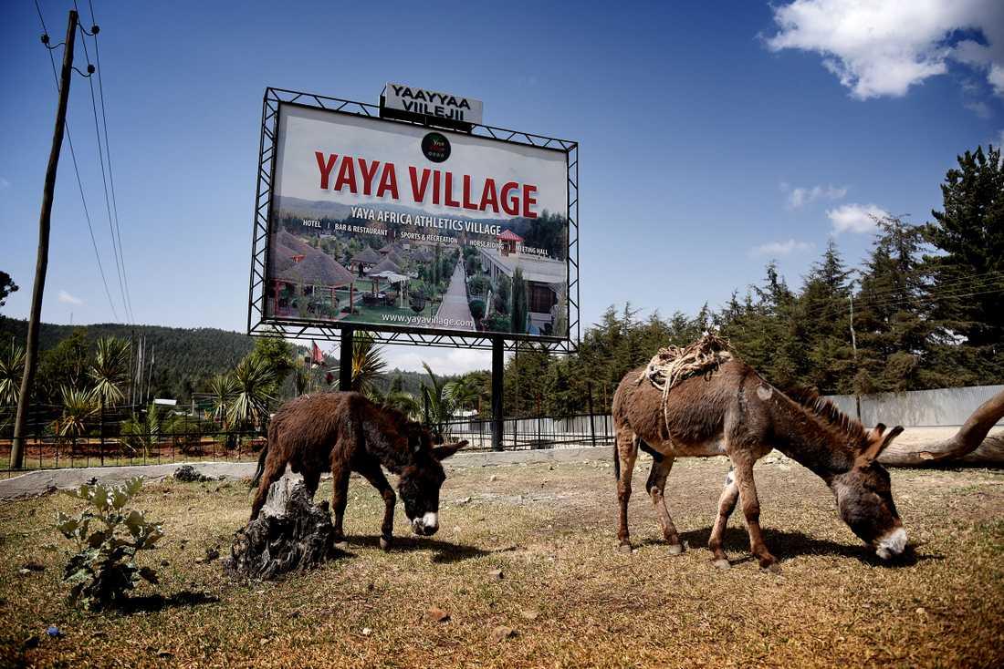 Yaya Village är en resort där många av de aktiva bor när de är på höghöjdsträning i Sululta. Här finns Yaya Africa Athletics Village, där de flesta elitlöpare bor. En av dem som tränar här är Abeba Aregawi.