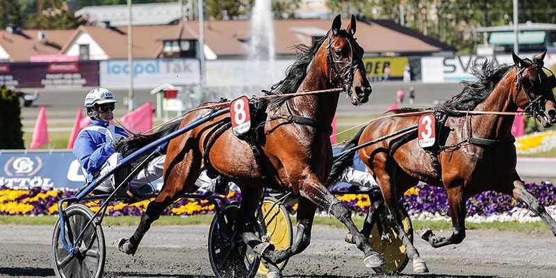 Ecurie D. vid segern på Solvalla på 1.09,2. Nu är det obesegrade jättelöftet klart för Hugo Åbergs Memorial på Jägersro.